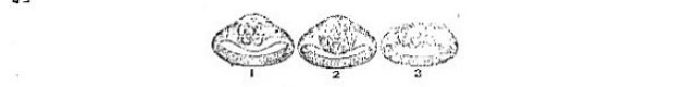 ambalpoo-rings-uxSDe31ilF.JPG